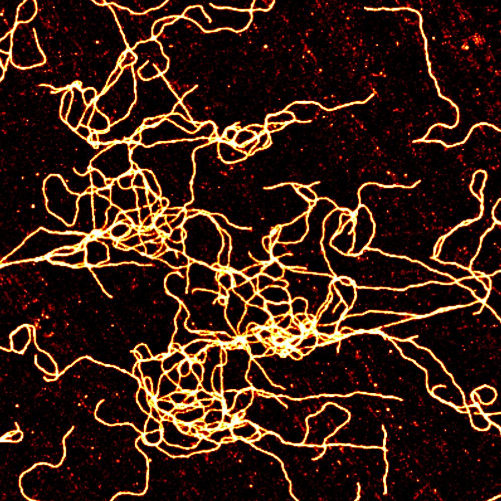 supramolecular fibers