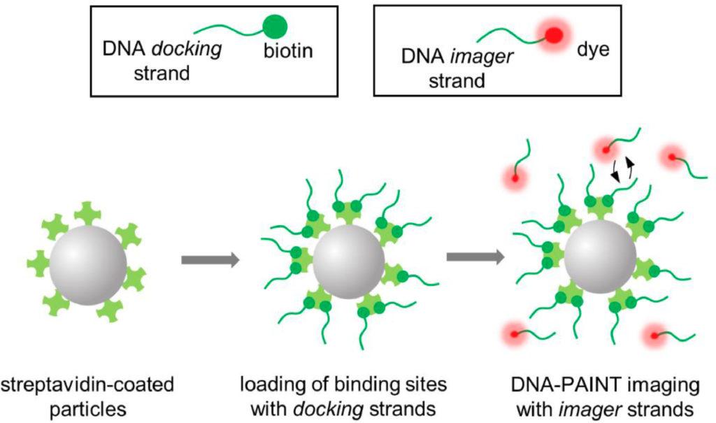 DNA-PAINT super-resolution technique biotin streptavidin